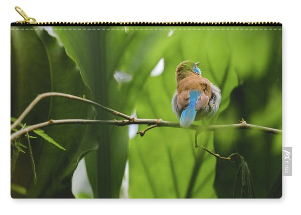 Carry-all Pouch featuring the photograph Blue Bird Has An Itch by Raphael Lopez