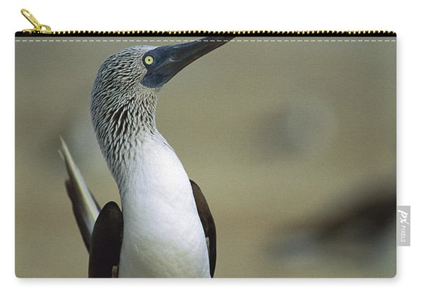 Blue-footed Booby Sula Nebouxii Carry-all Pouch