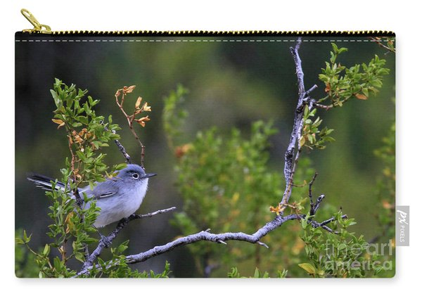 Blue-gray Gnatcatcher  Carry-all Pouch