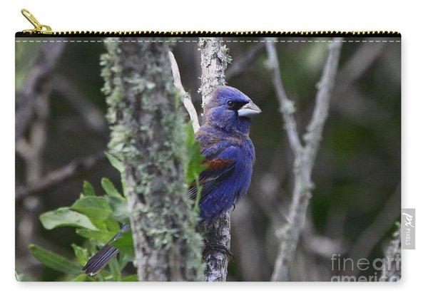 Blue Grosbeak In A Mangrove Carry-all Pouch