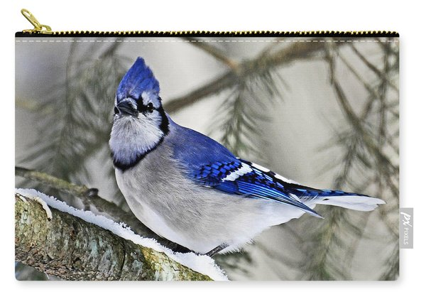 Blue Jay In Winter Carry-all Pouch