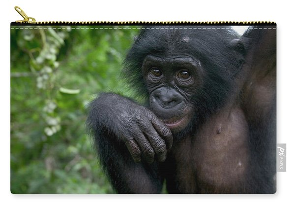 Bonobo Pan Paniscus Juvenile Orphan Carry-all Pouch