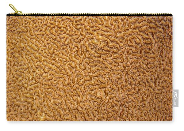 Brain Coral 47 Carry-all Pouch
