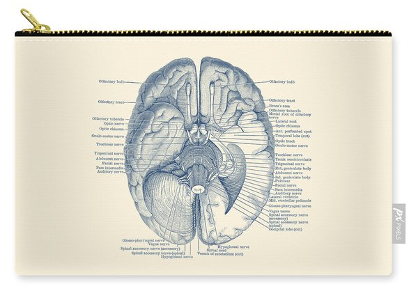 Brain Nervous System Diagram - Vintage Anatomy Carry-all Pouch