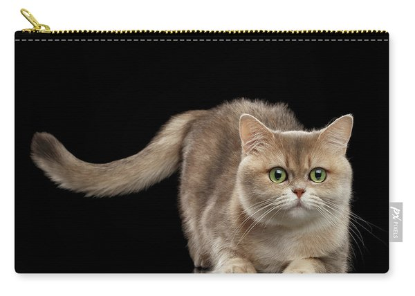 Brittish Cat With Curve Tail On Black Carry-all Pouch