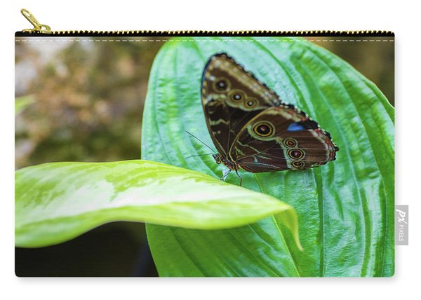 Brown And Blue Butterfly Carry-all Pouch