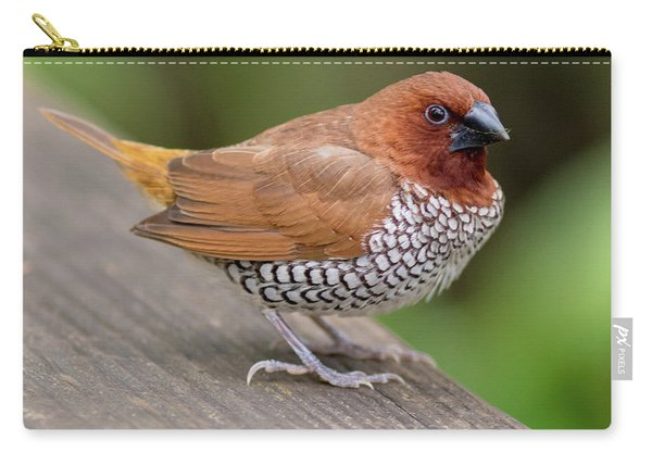 Carry-all Pouch featuring the photograph Brown Bird by Raphael Lopez