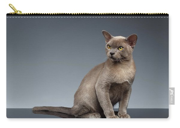 Burma Cat Sits And Loocking Up On Gray Carry-all Pouch