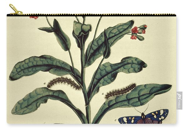 Butterflies, Caterpillars And Plants Plate Vi  Carry-all Pouch