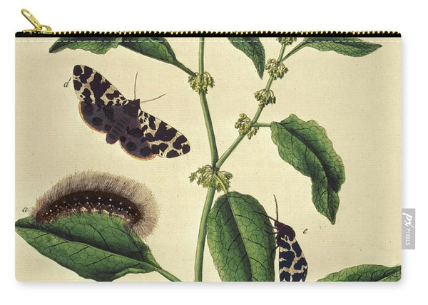 Butterflies, Caterpillars And Plants Plate Viii By J Dutfiel Carry-all Pouch