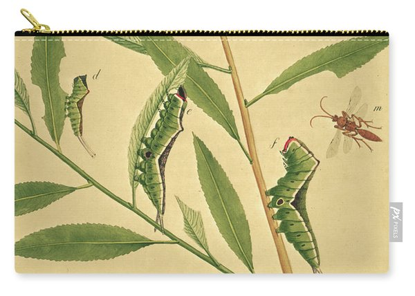 Butterflies, Caterpillars And Plants Plate X By J Dutfield Carry-all Pouch