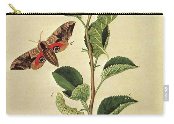 Butterflies, Caterpillars And Plants Plate Xii  Carry-all Pouch
