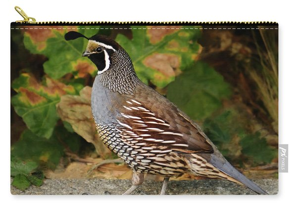 California Quail Rooster Carry-all Pouch