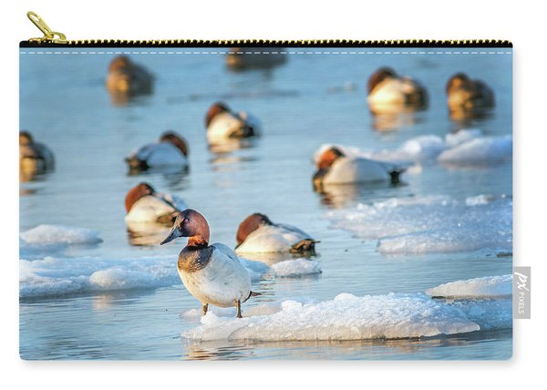 Canvasback Duck Standing On Ice In The Chesapeake Bay Carry-all Pouch