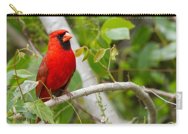 Cardinal 147 Carry-all Pouch
