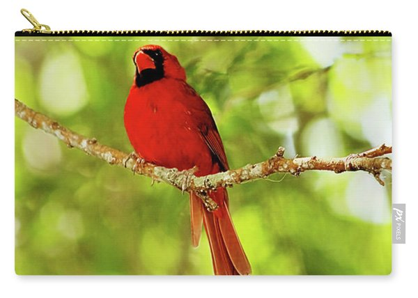 Cardinal Stare Carry-all Pouch