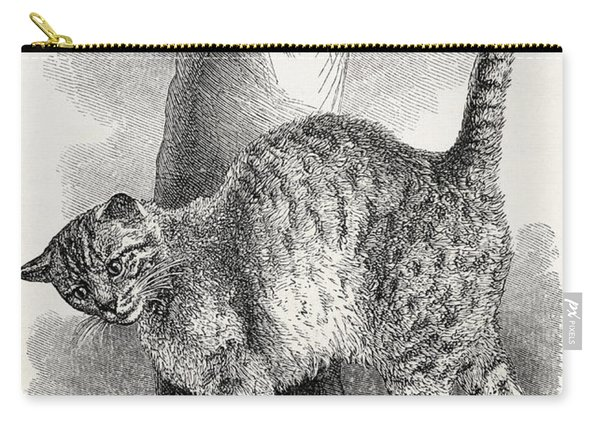 Cat In An Affectionate Frame Of Mind Carry-all Pouch