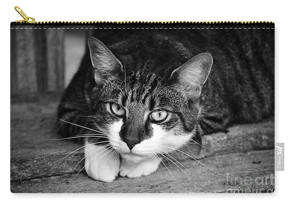Cat Naps 2 Carry-all Pouch