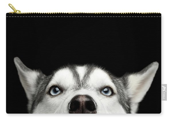 Carry-all Pouch featuring the photograph Close-up Head Of Peeking Siberian Husky by Sergey Taran