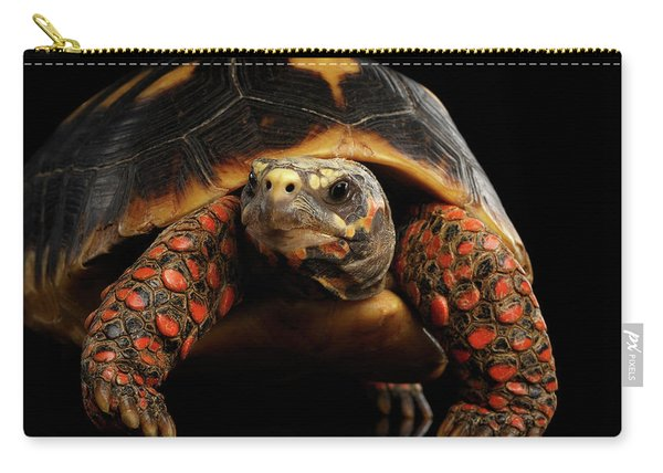 Close-up Of Red-footed Tortoises, Chelonoidis Carbonaria, Isolated Black Background Carry-all Pouch