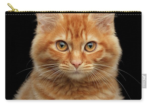 Close-up Portrait Of Ginger Kitty On Black Carry-all Pouch