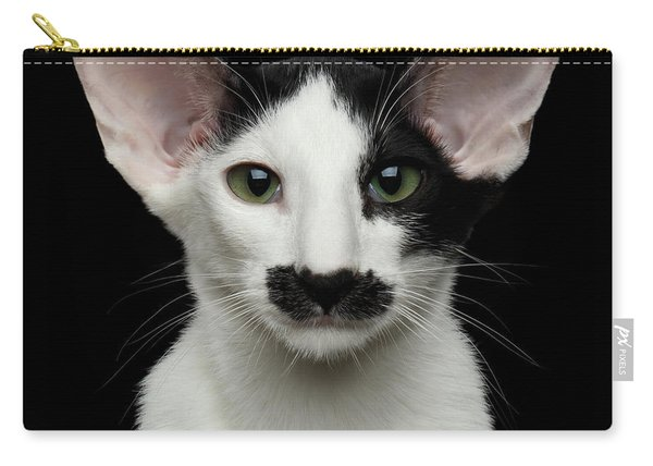 Closeup Funny Oriental Shorthair Looking At Camera Isolated, Bla Carry-all Pouch