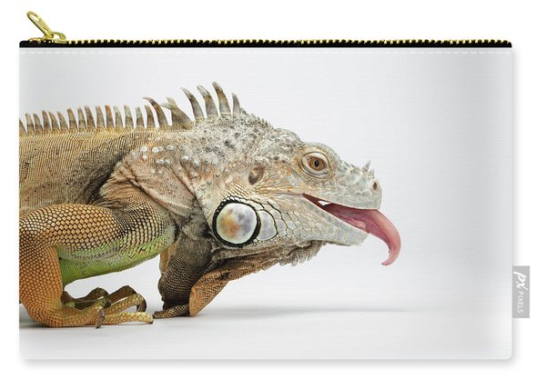 Closeup Green Iguana Showing Tongue On White Carry-all Pouch