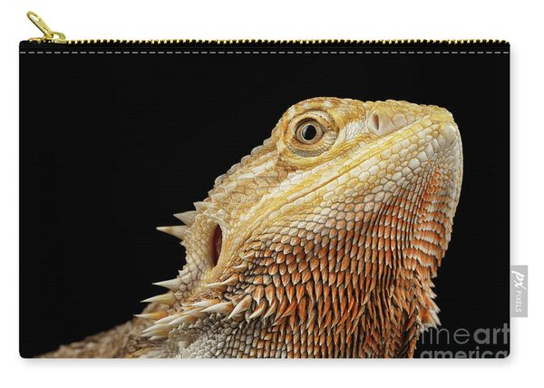 Carry-all Pouch featuring the photograph Closeup Head Of Bearded Dragon Llizard, Agama, Isolated Black Background by Sergey Taran