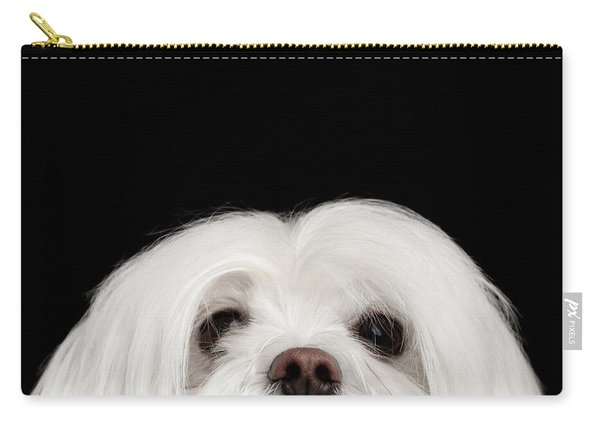 Carry-all Pouch featuring the photograph Closeup Nosey White Maltese Dog Looking In Camera Isolated On Black Background by Sergey Taran