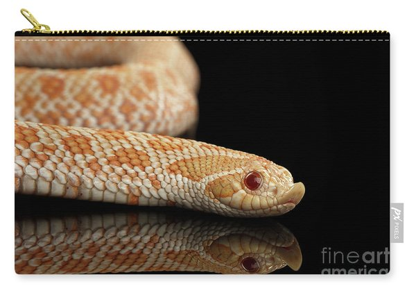 Closeup Pink Pastel Albino Western Hognose Snake, Heterodon Nasicus Isolated On Black Background Carry-all Pouch