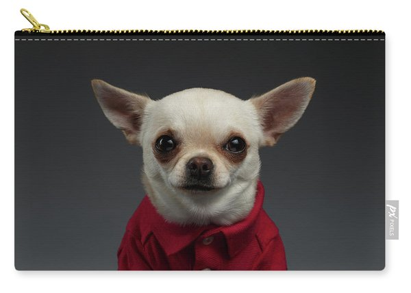 Carry-all Pouch featuring the photograph Closeup Portrait Chihuahua Dog In Stylish Clothes. Gray Background by Sergey Taran