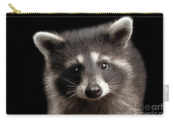 Closeup Portrait Cute Baby Raccoon Isolated On Black Background Carry-all Pouch