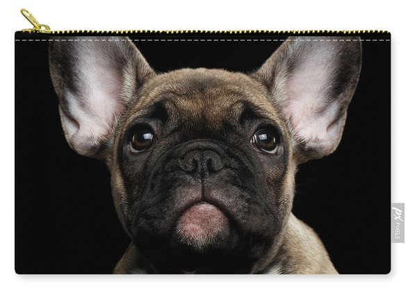 Closeup Portrait French Bulldog Puppy, Cute Looking In Camera Carry-all Pouch