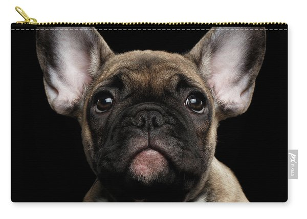 Carry-all Pouch featuring the photograph Closeup Portrait French Bulldog Puppy, Cute Looking In Camera by Sergey Taran