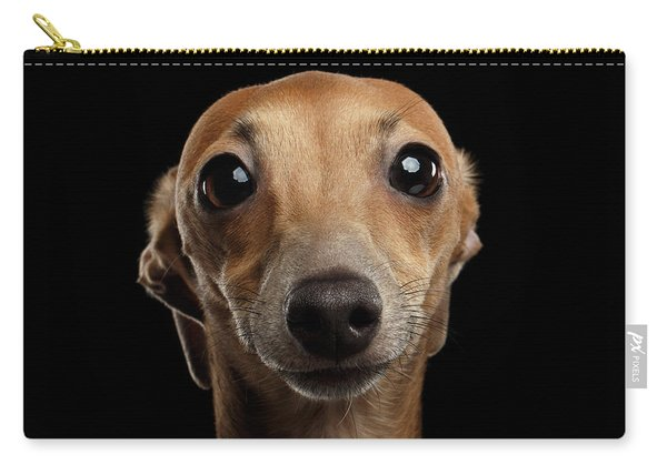 Carry-all Pouch featuring the photograph Closeup Portrait Italian Greyhound Dog Looking In Camera Isolated Black by Sergey Taran