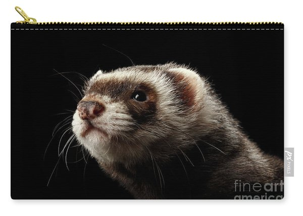 Carry-all Pouch featuring the photograph Closeup Portrait Of Funny Ferret Looking At The Camera Isolated On Black Background, Front View by Sergey Taran