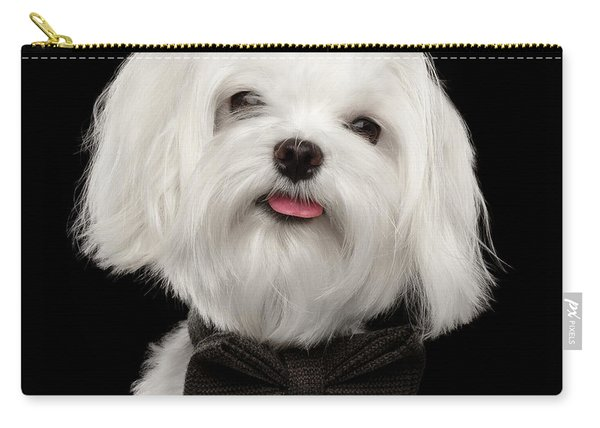Closeup Portrait Of Happy White Maltese Dog With Bow Looking In Camera Isolated On Black Background Carry-all Pouch
