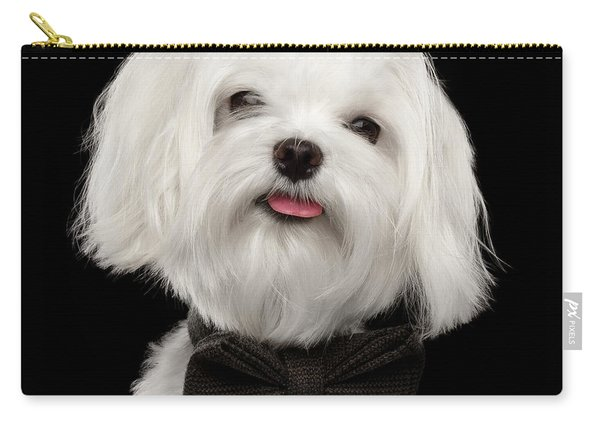 Carry-all Pouch featuring the photograph Closeup Portrait Of Happy White Maltese Dog With Bow Looking In Camera Isolated On Black Background by Sergey Taran