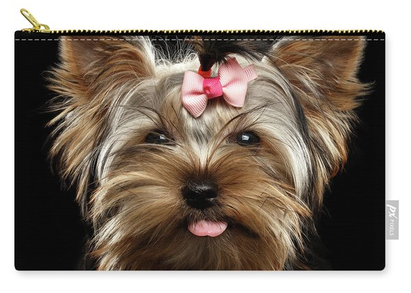 Carry-all Pouch featuring the photograph Closeup Portrait Of Yorkshire Terrier Dog On Black Background by Sergey Taran
