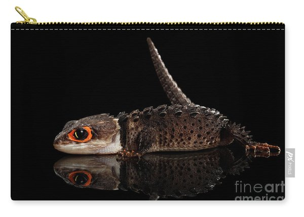 Carry-all Pouch featuring the photograph Closeup Red-eyed Crocodile Skink, Tribolonotus Gracilis, Isolated On Black Background by Sergey Taran