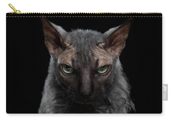 Closeup Werewolf Sphynx Cat Angry Looking In Camera Isolated Black Carry-all Pouch
