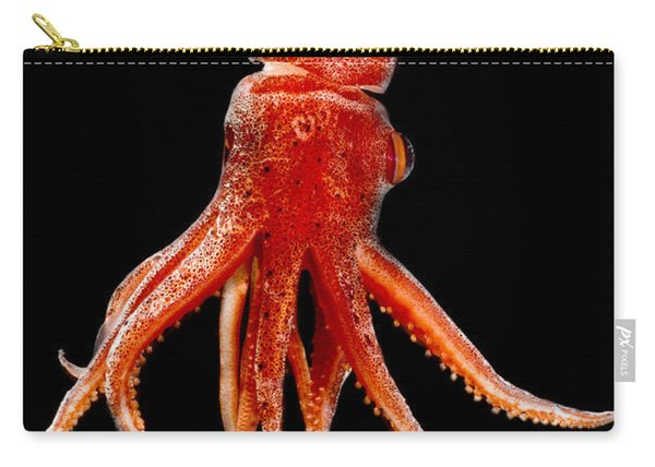 Cock-eyed Squid, Histoteuthis Carry-all Pouch