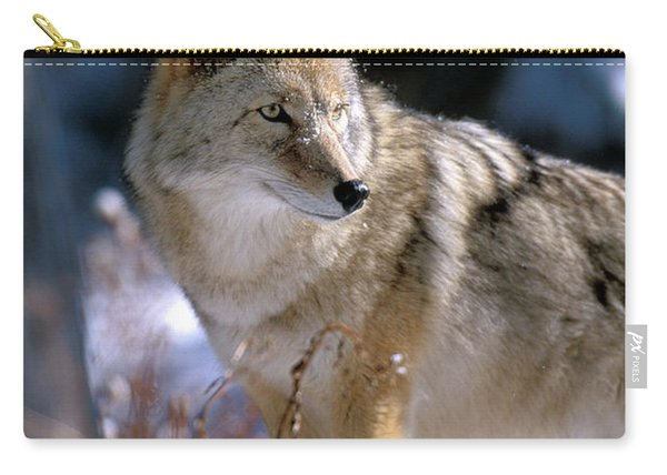 Coyote In Winter Light Carry-all Pouch