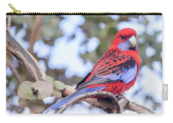 Crimson Rosella 03 Carry-all Pouch