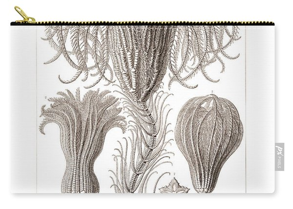 Crinoids Carry-all Pouch
