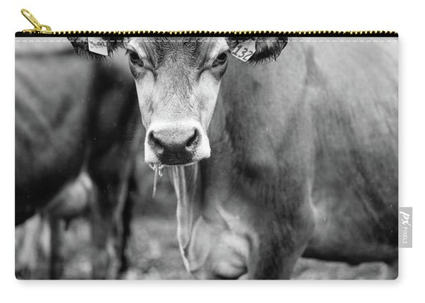 Dairy Cow On A Farm Stowe Vermont Black And White Carry-all Pouch