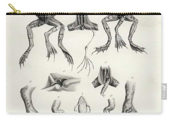 Deformed Frogs - Historic Carry-all Pouch