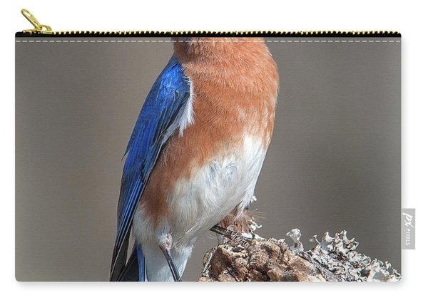 Eastern Bluebird Dsb0300 Carry-all Pouch
