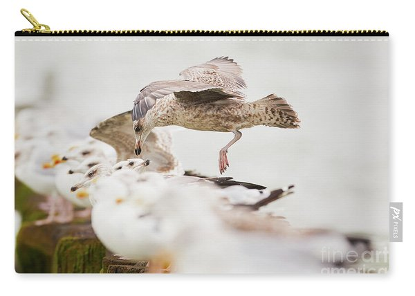 European Herring Gulls In A Row, A Landing Bird Above Them Carry-all Pouch