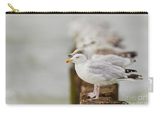 European Herring Gulls In A Row Fading In The Background Carry-all Pouch